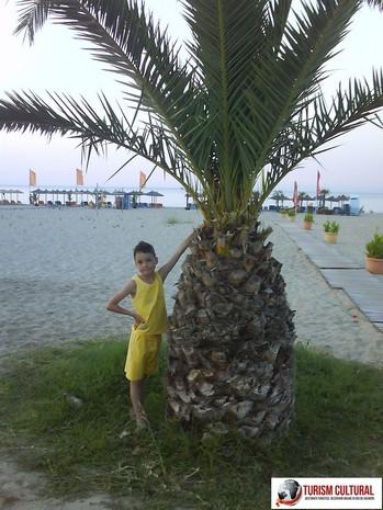 Grecia Nei Pori palmier la intrarea pe plaja