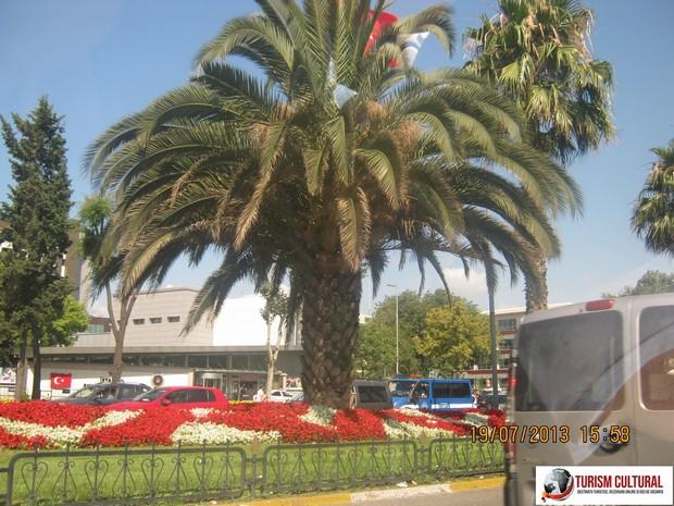 Turcia Istanbul palmier