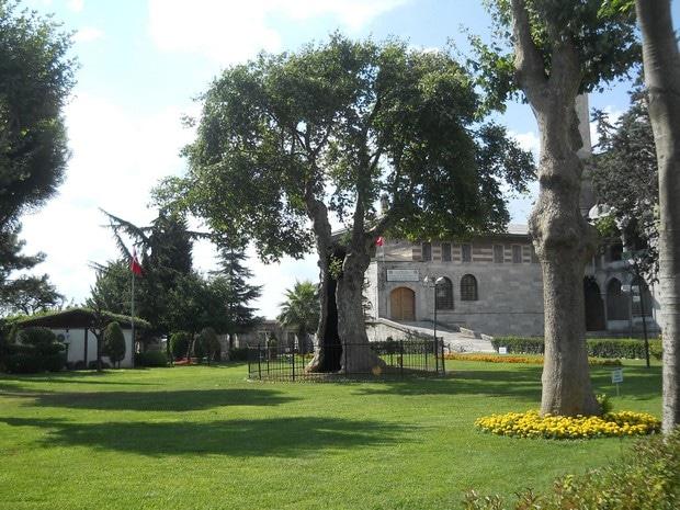 Turism Cultural - Turcia Istanbul Moscheea Albastra copacul cosmic al vietii