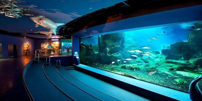 Turism Cultural - Istanbul acvariul Akvaryum