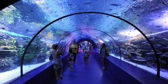 Turism Cultural - Istanbul acvariul Sea Life Akvaryum